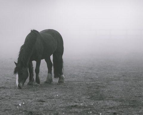 Pferd in Nebel
